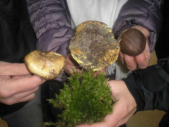 Різноманітні гриби з лісу на Старому Салтові